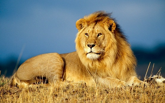 Животный мир Африки - Студенческий портал