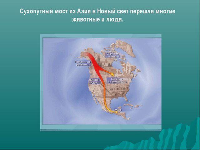 Население Северной Америки - Студенческий портал