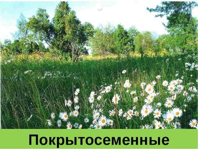 Отдел Покрытосеменные, или Цветковые - Студенческий портал