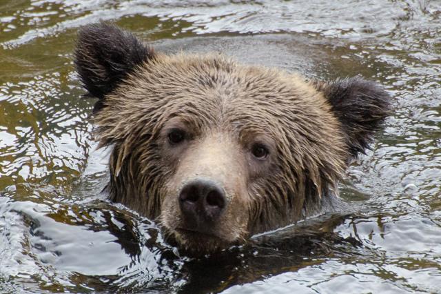 Животный мир Северной Америки - Студенческий портал