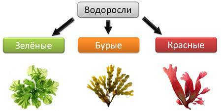 Значение одноклеточных в природе и жизни человека - Студенческий портал