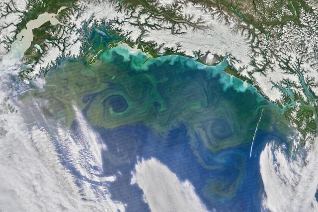 Органический мир океанов - Студенческий портал