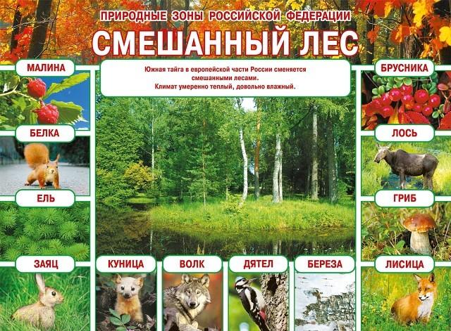 Природные зоны - Студенческий портал