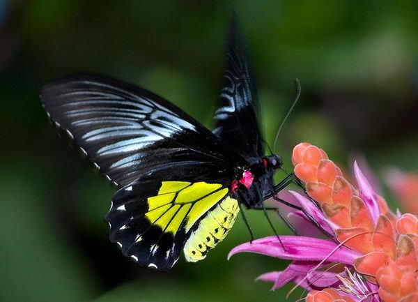 Значение насекомых в природе и жизни человека - Студенческий портал