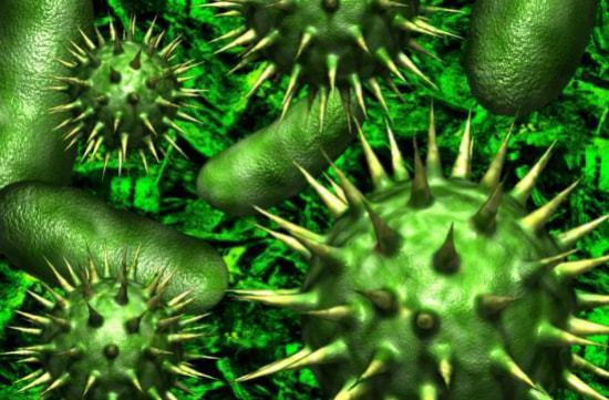 Размножение бактерий - Студенческий портал