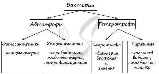 Особенности строения и процессов жизнедеятельности цианобактерий - Студенческий портал