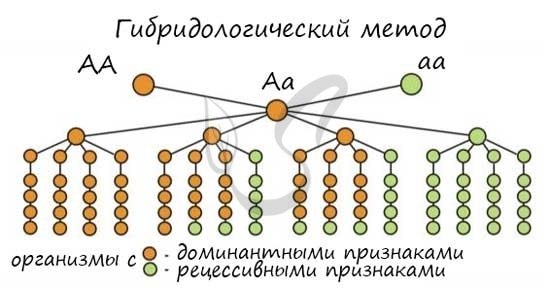 Близнецовый метод - Студенческий портал