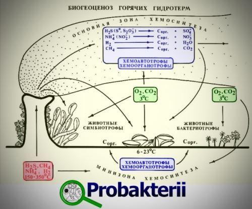 Особенности питания бактерий - Студенческий портал