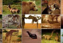 Зоология - Студенческий портал