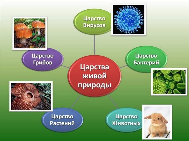 Роль представителей царства Дробянок в природе и жизни человека - Студенческий портал