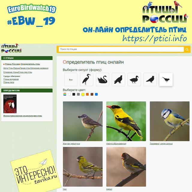 Разнообразие птиц - Студенческий портал