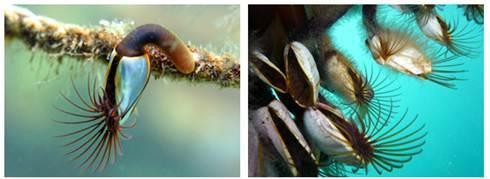 Значение ракообразных в природе и жизни человека - Студенческий портал