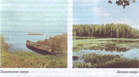 Подземные воды, болота - Студенческий портал