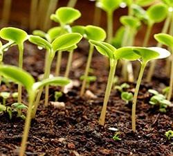 Удобрения. Основные виды удобрений - Студенческий портал