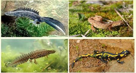 Разнообразие земноводных. Значение земноводных в природе и жизни человека - Студенческий портал