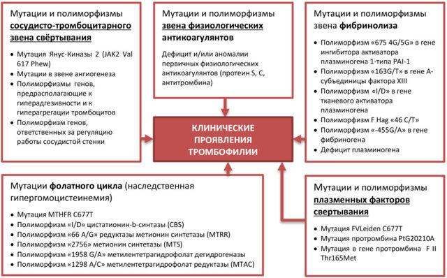 Гемостаз - Студенческий портал