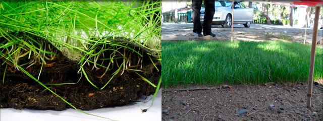 Почва и геосфера - Студенческий портал