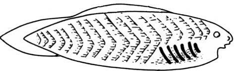 Надкласс Рыбы - Студенческий портал