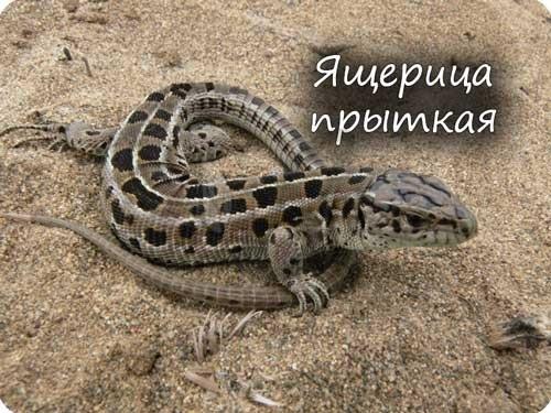 Класс пресмыкающиеся, или Рептилии. Общая характеристика класса - Студенческий портал