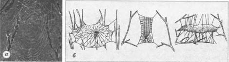 Класс Паукообразные. Строение и процессы жизнедеятельности - Студенческий портал
