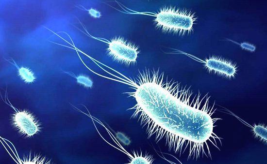Болезнетворные бактерии и борьба с ними - Студенческий портал