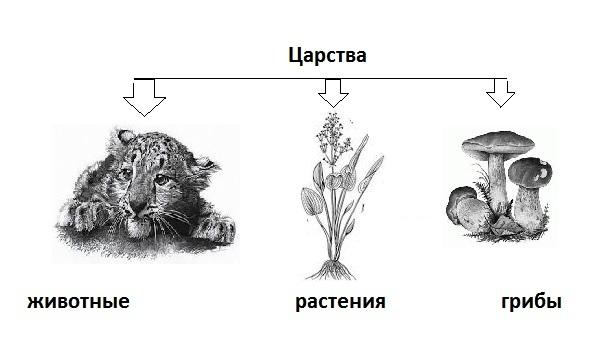 Царство Животные - Студенческий портал