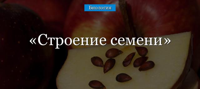 Строение семени двудольных и однодольных растений - Студенческий портал