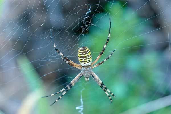 Разнообразие паукообразных - Студенческий портал