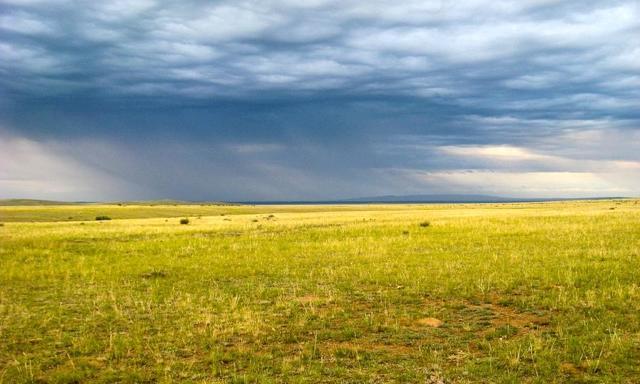 Степные и пустынные районы Восточно-Европейской равнины - Студенческий портал