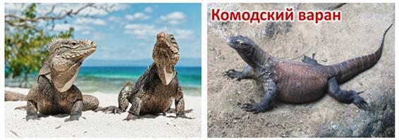 Значение рептилий в природе и жизни человека - Студенческий портал