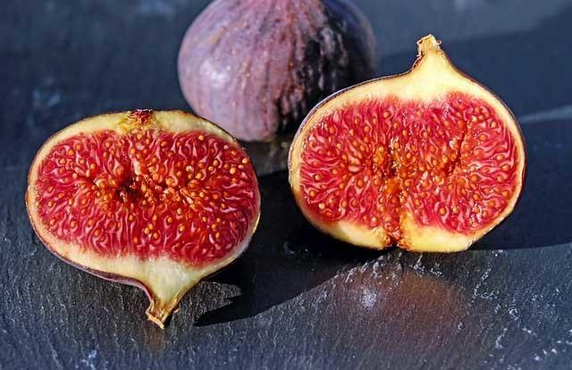 Типы плодов - Студенческий портал
