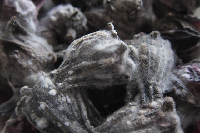 Плесневые грибы - Студенческий портал