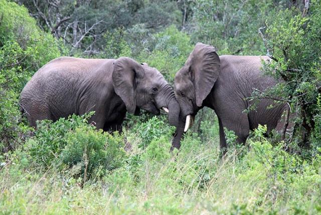 Растительный мир Африки - Студенческий портал