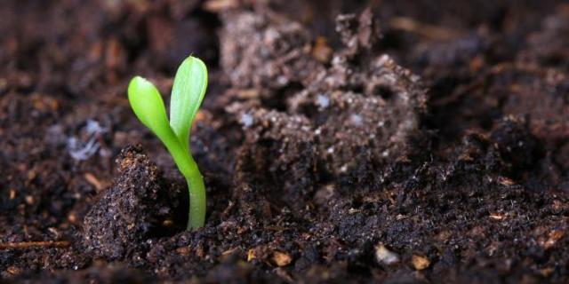 Что такое почва, её виды - Студенческий портал