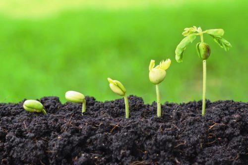 Условия прорастания семян - Студенческий портал