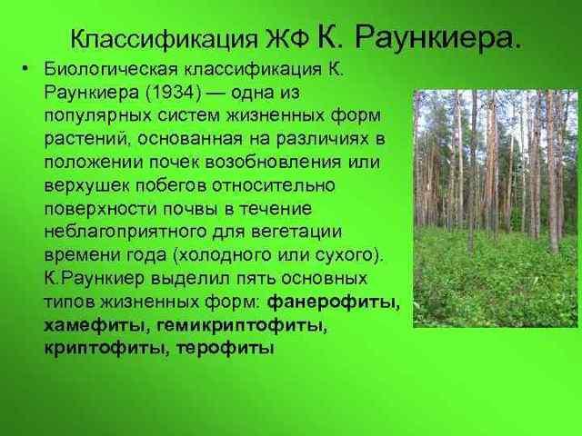 Жизненные формы растений - Студенческий портал