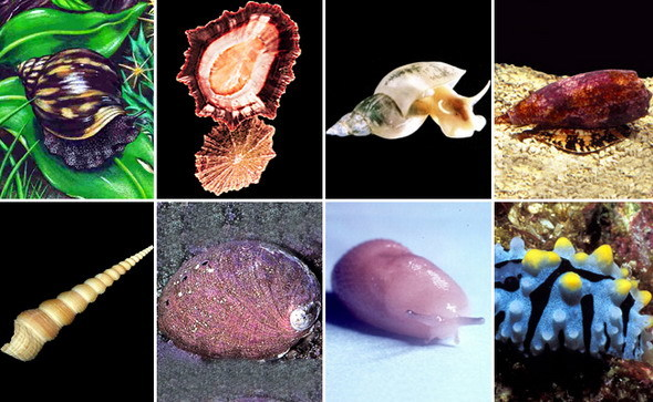 Разнообразие моллюсков - Студенческий портал