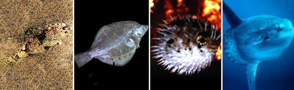 Разнообразие костистых рыб - Студенческий портал