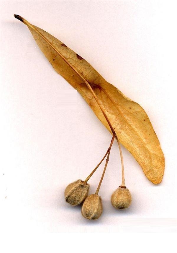Распространение плодов и семян - Студенческий портал