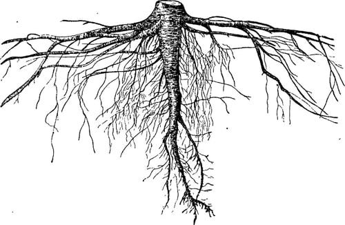 Высшие семенные растения - Студенческий портал