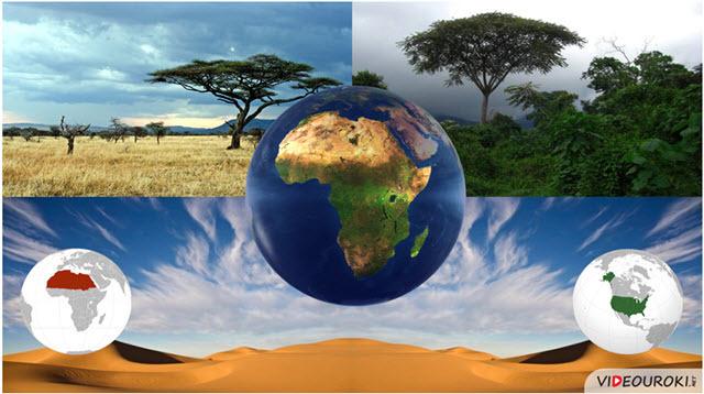 Географическое положение и история исследования Африки - Студенческий портал